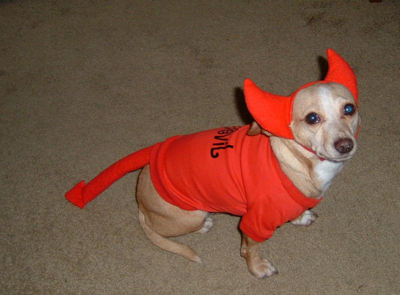 Devil dog
