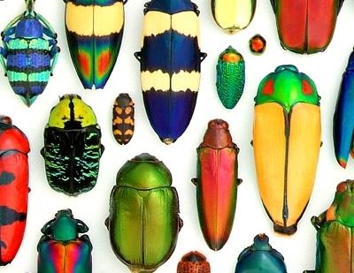 Beetles_4