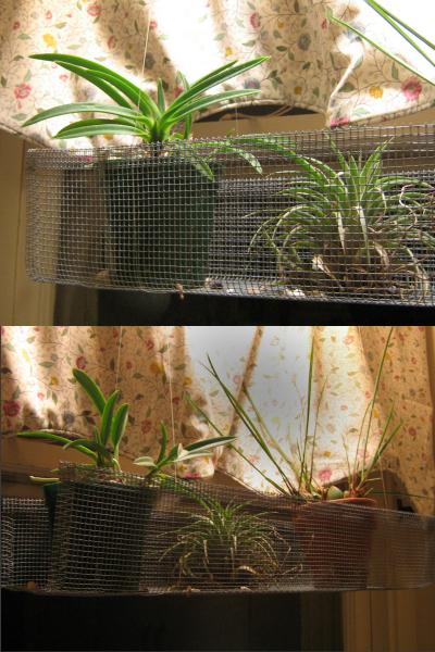 Plant_holder